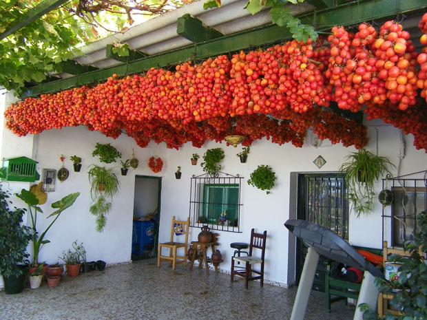 Tomates de viña colgados en el sombrajo de una casa en las afueras de Jerez. Foto: Cosas de Comé