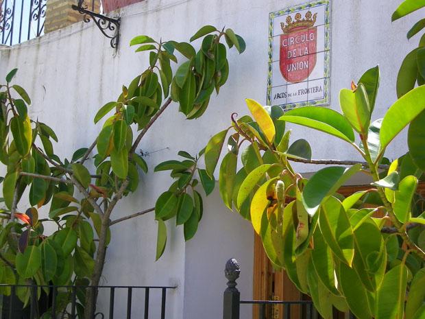 Imagen de la Terraza del bar Círculo de la Unión. Foto: Cosas de Comé