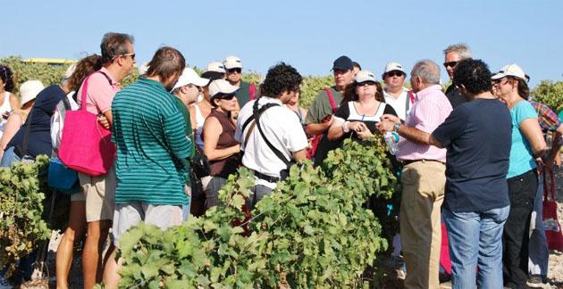 Sebastián Aragon explica a los excursionistas como tienen que vendimiar la uva rodeado de vides. Foto: Sebastián Gómez