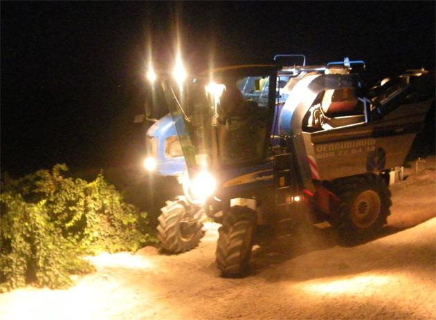 Una vendimiadora se aproxima a las viñas de Barbadillo para iniciar la recolección a las doce de la noche. El objetivo, recoger la uva a temperaturas más bajas. Foto: Cosas de Comé