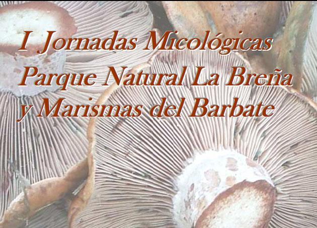 Detalle del cartel de estas primeras jornadas micológicas en Barbate.