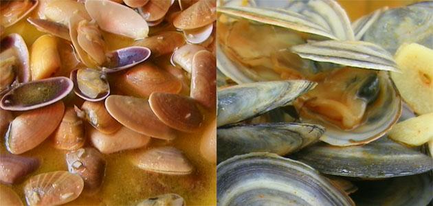 Los dos tipos de coquinas que se consumen en la provincia de Cádiz. Las primeras, más pequeñas, se consumen sobre todo en Sanlúcar. Las segundas, las de La Isla, se consumen en la Bahía de cádiz. Foto: Cosas de Comé